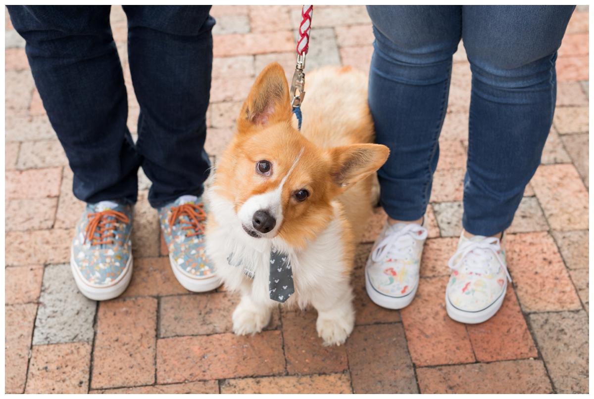 Engaged Couple with Corgi Disney Themed Frederick Maryland photos. Engagement photos of shoes