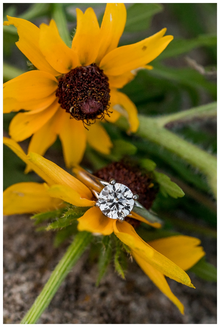 Columbia Maryland Couple's Centennial Park Engagement Photos with their dog Harvey. Round engagement ring close up. Ring Shot. Black eyed susans. Engagement ring on flower.