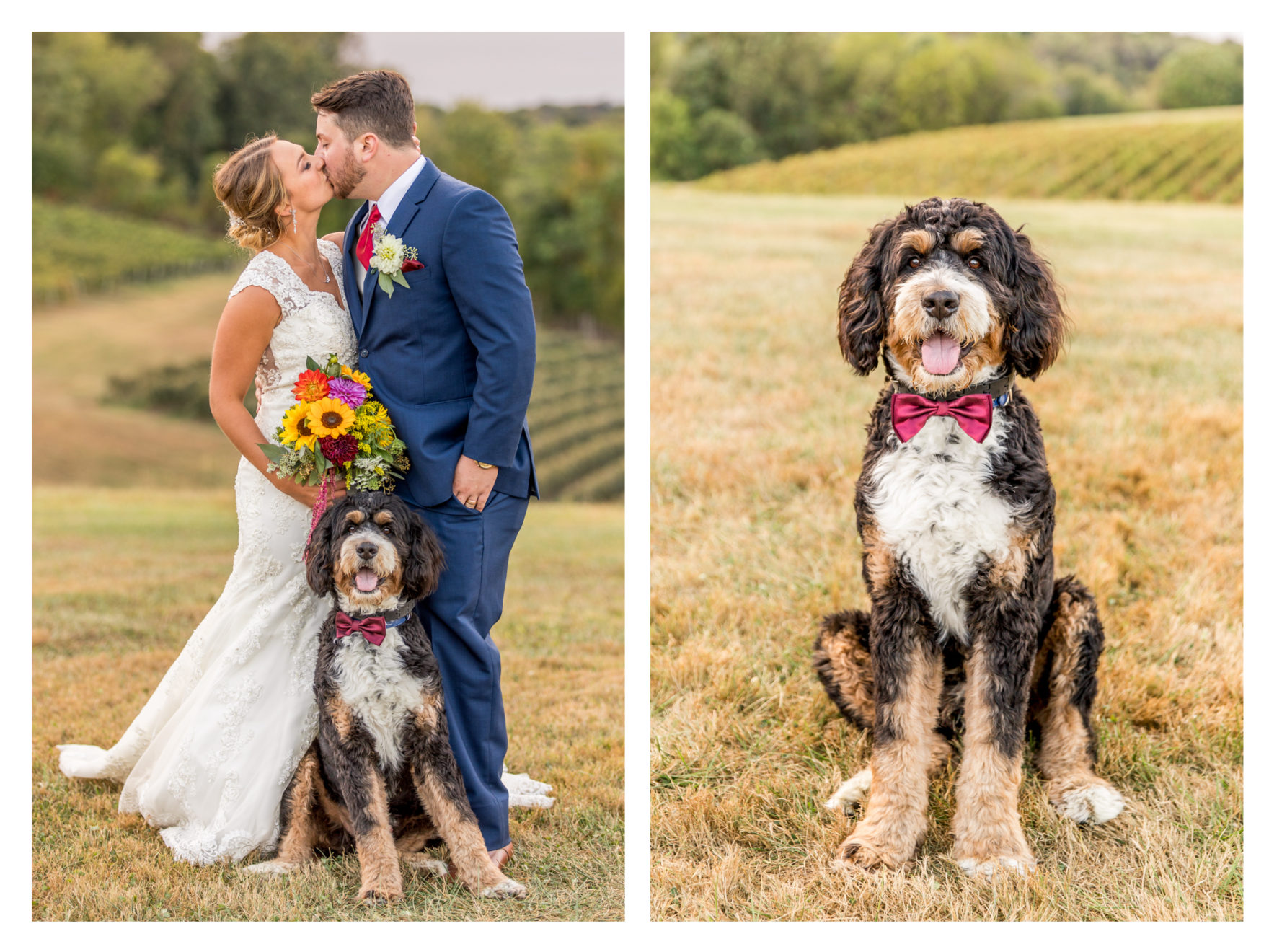 Linganore Winecellars wedding. Linganore winery wedding. winery wedding. fall wedding. frederick weddings. frederick wedding photographer. dog wedding. dog ring bearer. bernadoodle. barn wedding.